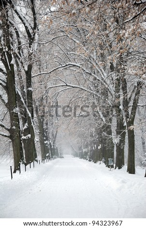 Snow Covered Winter Path under Trees