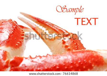 Snow crab legs on white background with copy space.  Macro with shallow dof.  Selective focus on claw. - stock photo