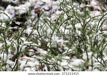 Snow crystals are ice particles on the green grass in the winter. Macro photography of snow flakes. Beautiful nature winter in the woods. Frost cold days. - stock photo