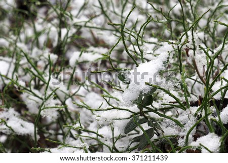 Snow crystals are ice particles on the green grass. Macro photography of snow flakes. Beautiful nature winter in the woods. Frost cold days. - stock photo