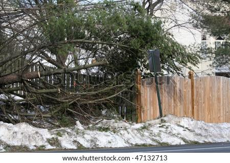 Snow Damage - stock photo