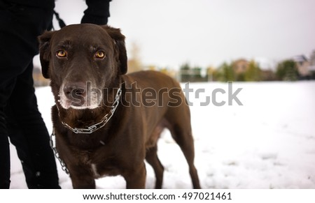 Snow fall Labrador