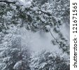 snow falling from pine branches - stock photo