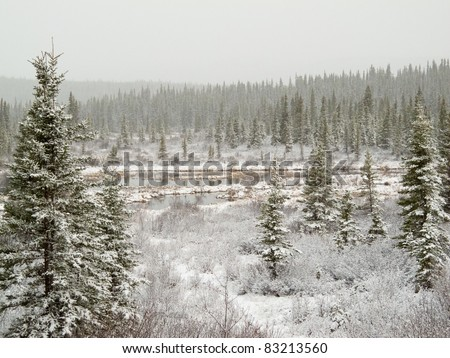 Snow falling on marshland pond and boreal forest (taiga) of Yukon Territory, Canada. - stock photo