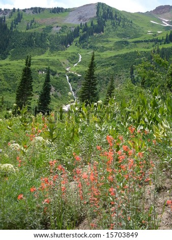 Snow-fed waterfalls and Fairy Trumpets (flowers), near Gothic, Colorado - stock photo