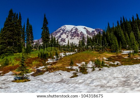 Snow Field and Alpine Meadow on Mount Rainier in August 2011.