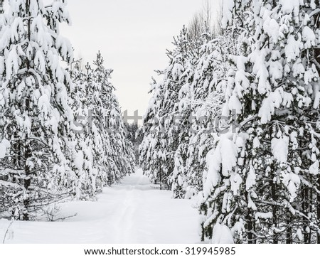 Snow footpath, trees in snow. Beautiful winter landscape  - stock photo