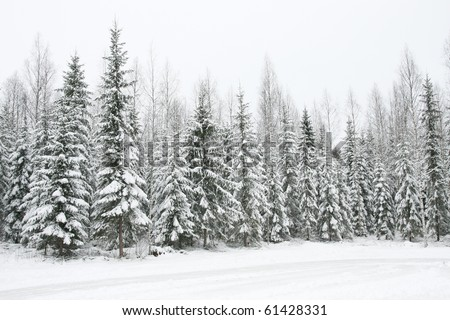 Snow forest - stock photo