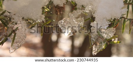 Snow glistening on evergreens - stock photo