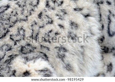 Snow leopard close up abstract fur