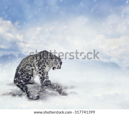 Snow Leopard Sitting on the Rock - stock photo