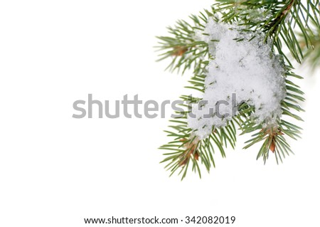 snow lies on the pine branch - stock photo