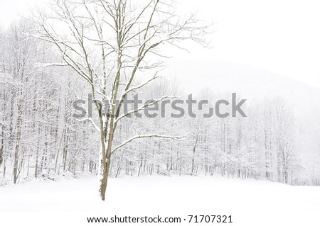 Snow, Locust Tree, Nicholas County, West Virginia, USA - stock photo