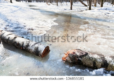 snow melting in woods in early spring - stock photo