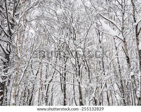 snow mountain japan hokkaido - stock photo