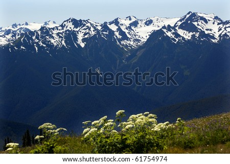 Snow Mountains Hurricane Ridge Olympic National Park Washington State Pacific Northwest Wildflowers Green Valleys Ridge Line - stock photo