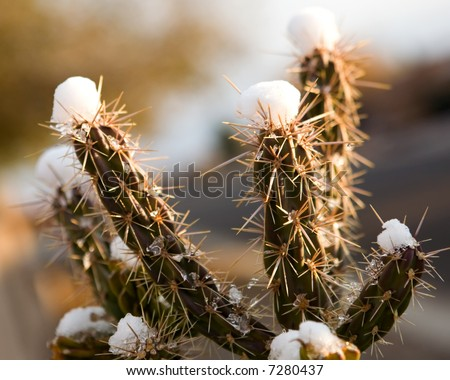 Snow on a cactus in New Mexico. - stock photo