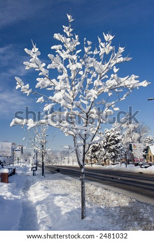 Snow on a tree the morning after a big storm - stock photo