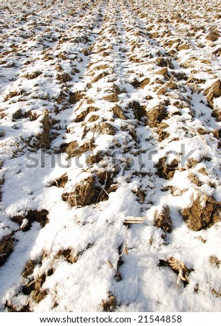 snow on the corn field