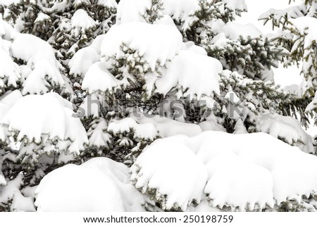Snow on the tree - stock photo