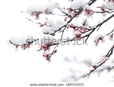 Snow on the trees in spring colors - stock photo