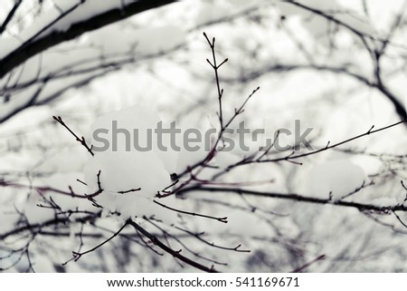snow on the twigs
