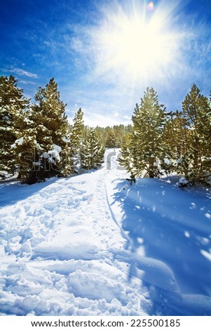 Snow path in snowy mountain forest with pines and spruce trees - stock photo