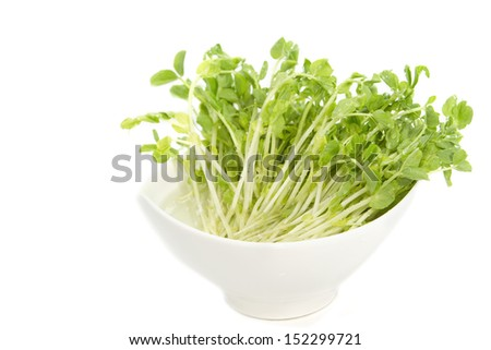 Snow Pea Sprouts  in white bowl - stock photo