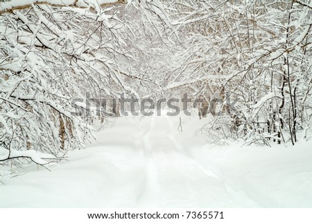 snow road in wood
