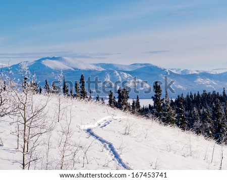 Snow-shoe trail in boreal forest taiga winter wilderness landscape of Yukon Territory, Canada, north of Whitehorse - stock photo
