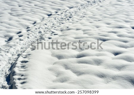 Snow shoe trail in snow. - stock photo