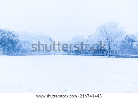 Snow, snow scene, covered with snow in Japan  - stock photo
