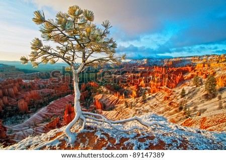 snow storm in Bryce - stock photo