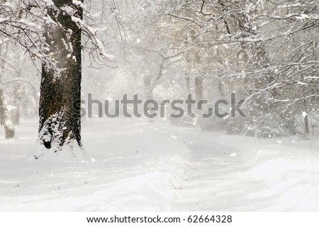 snow storm in the park - stock photo