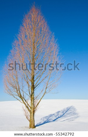 snow tree - stock photo
