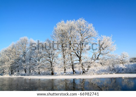 snow tree on coast river - stock photo