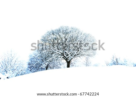 snow white in the enchanted forest - stock photo