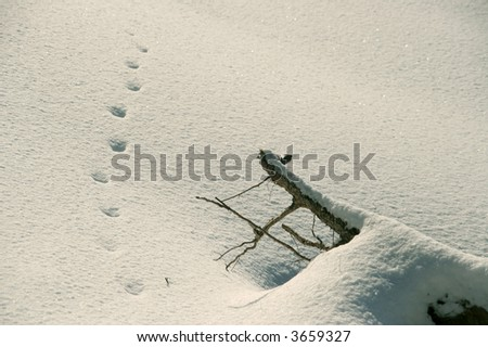 snowcovered branch and a pathway of steps in the snow - stock photo