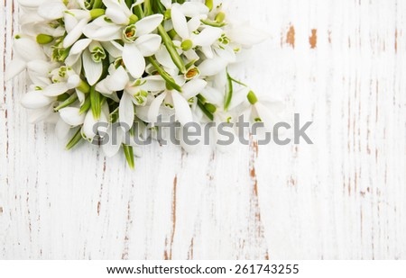 snowdrops bunch on a old wooden background - stock photo