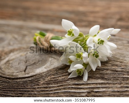 snowdrops bunch on wooden background - stock photo