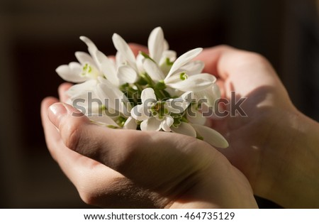 snowdrops in the hands of a child