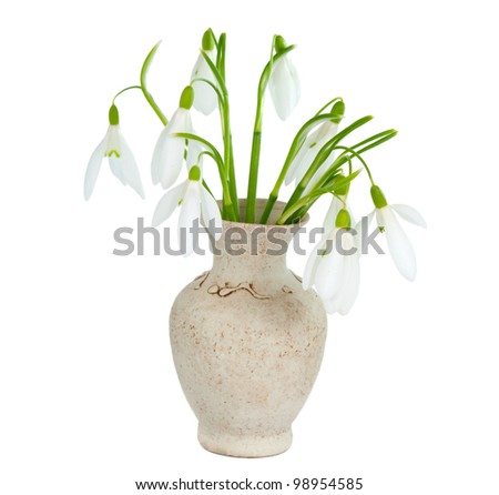 snowdrops in vase isolated on white background