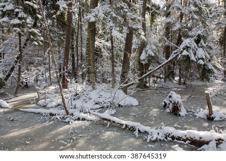 Snowfall after wetland stand in morning with snow wrapped trees and frozen water around,Bialowieza Forest,Poland,Europe - stock photo