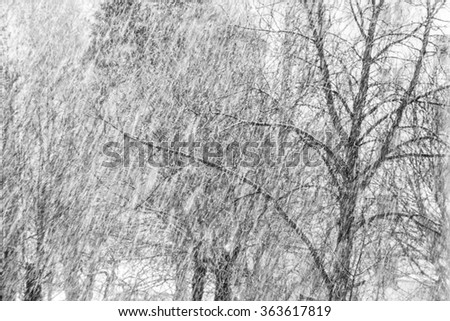Snowfall and blizzard in winter. - stock photo