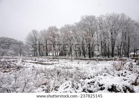 Snowfall at Gassho-zukuri village in Shirakawa-go, Japan - stock photo