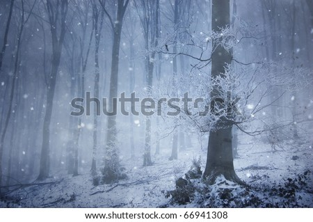 snowfall in a magical forest with a huge old tree in winter - stock photo