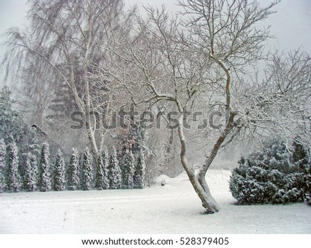 Snowfall in country yard and trees cowered by snow.