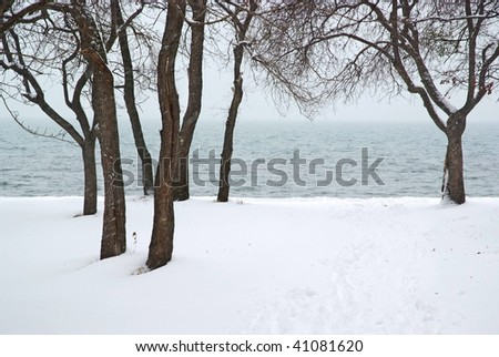 snowfall in forest against the sea - stock photo