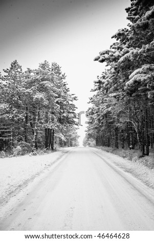 Snowfall in the forest - stock photo