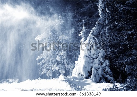 snowfall in the forest. natural winter background. black and white toned picture - stock photo